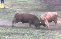 chega antero nuno lamalonga vs garoto oliveira ferral 14