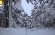 Neve – 2008