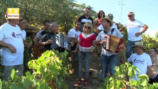 Vindima da Quinta da Balbina – Cantadores 2018