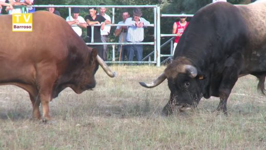 Chega Montalegre Chico vs Bonito 2018