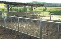 Porco Bísaro – 1.º lugar na Feira Agrícola de Santarém – Fernando Justo, apresenta a Quinta do Trigal – 2013