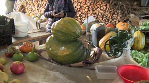 Ano de boa e rara colheita – Gaiteiros 2016